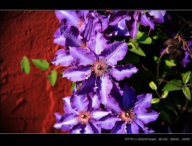 紫色街道风景图片