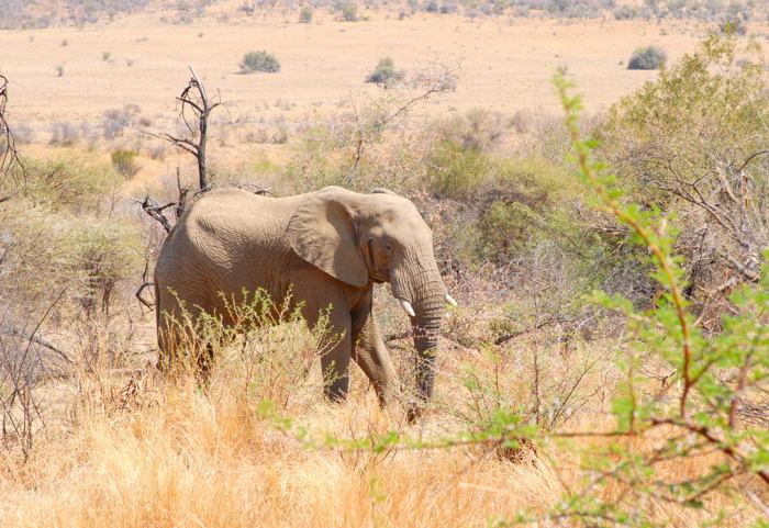 非洲草原上的野生动物
