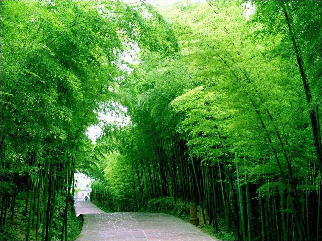 蜀南竹海风景区图片