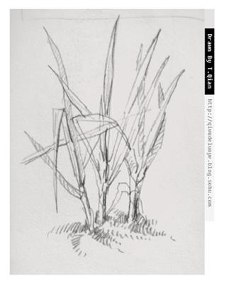 简单风景速写高清图片,风景写生速写带照片,简单速写图片树