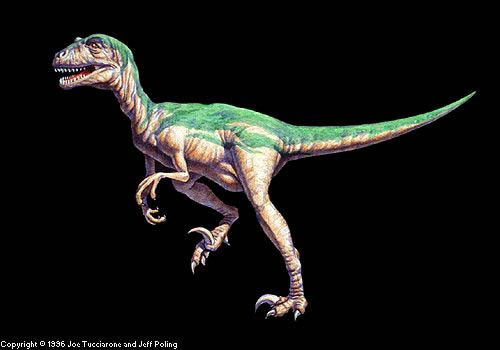 最大的蒙古鹦鹉嘴龙成年个体重量可能超过20千克.