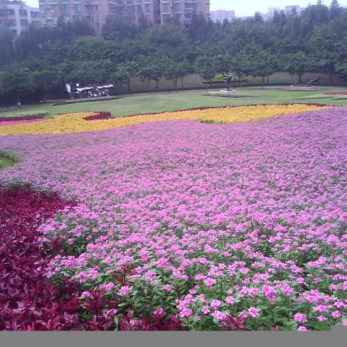 广州雕塑公园一行