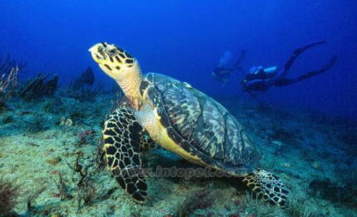 壁纸 海底 海底世界 海洋馆 水族馆 桌面 500_304