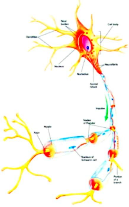 细胞的基本结构和功能归纳图