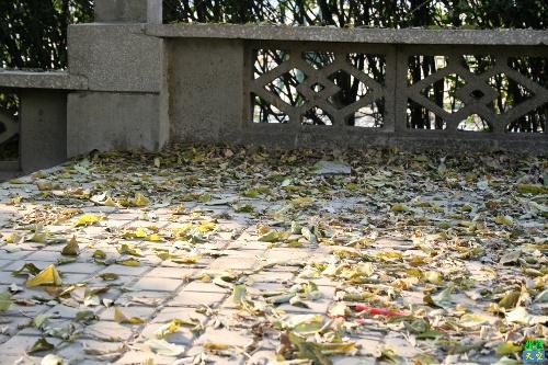 树叶落在学校里