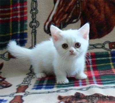 短腿猫-ming-搜狐博客