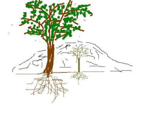 手绘大树简笔画彩色