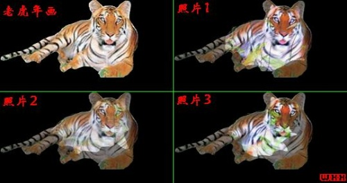 分别重叠(让基准三角形完全对齐),结果发现,老虎花纹连接的天衣无缝