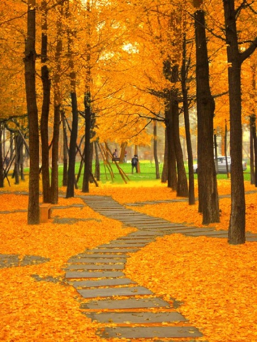 寒风中的落叶图片