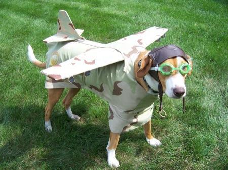 知道我们家狗狗玩的这是嘛造型么``其实就是一个柚子皮做的帽子``
