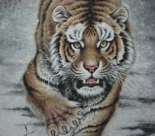 壁纸 动物 虎 老虎 桌面 500_439