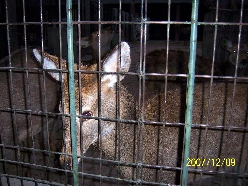 冬游保定动物园-观鱼论史山房-我的搜狐