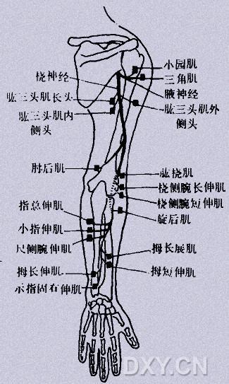 简单的解剖手绘分析图