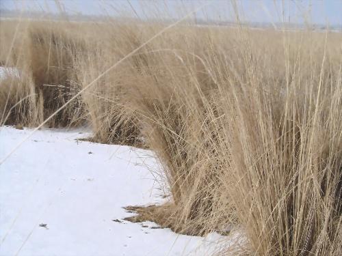雪地抓野兔-感受四季的博客-搜狐空间