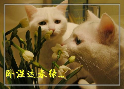卧梅又闻花-大头姐姐之cat事件簿-我的搜狐