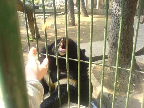 整个动物园最活跃的是猴子们