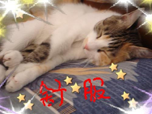 我的宝贝-睡不着觉的猫-搜狐博客