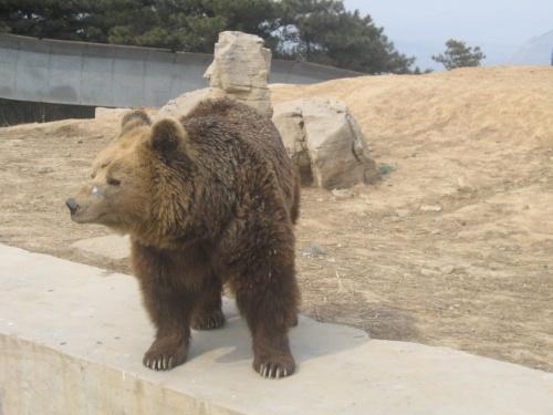 意外收获于跑马岭野生动物园.