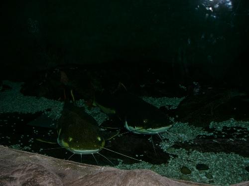 游青岛海底世界(图)
